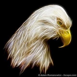 Bald Eagle Fractal