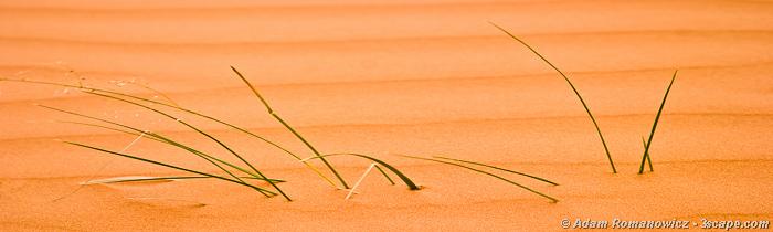 Coral Pink Sand Dunes, Utah - Macro Panoramic