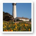 Pigeon Point Lighthouse and California Poppies