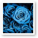 Moody Blue Rose Bouquet