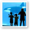 Kids watching the killer whales (Orca's)