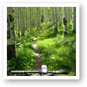 Mountain biking through aspen forest in the La Sal mountains
