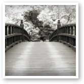 Buy Print of Japanese Dream Infrared
