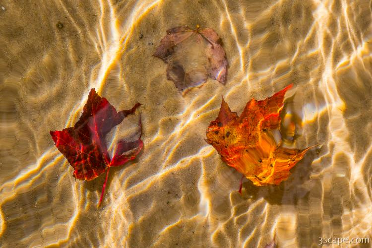 Fall Leaves in the Water