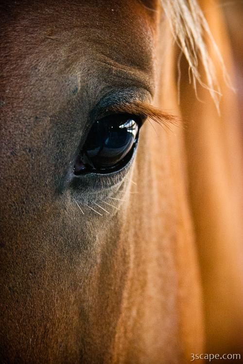 Horse Eye Photograph Landscape Amp Travel Photography For