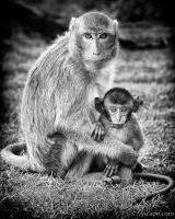 Mother and Baby Monkey B&W
