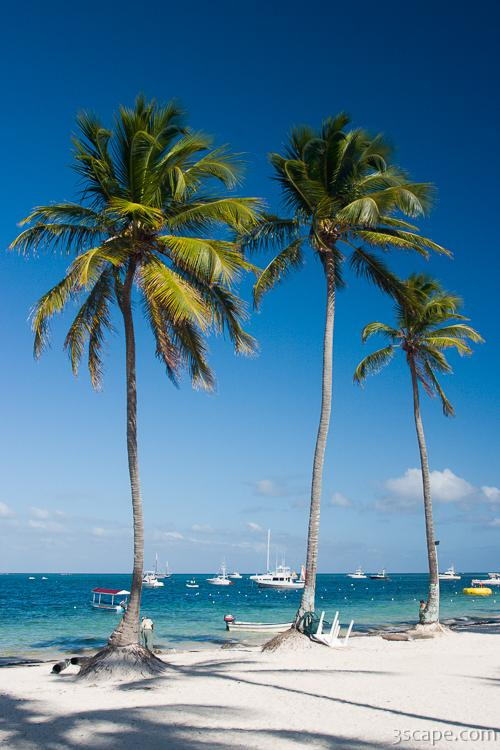 Tall palm trees on the beach Photograph - Fine Art Prints ...