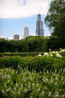 Sears Tower from Grant Park
