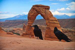Ravens visiting Delicate Arch