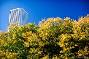 Beginning of fall colors in Chicago