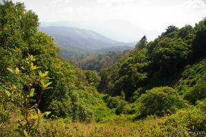 Northern Thailand jungles - Doin Inthanon National Park
