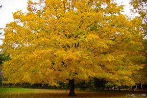 Fall colored tree