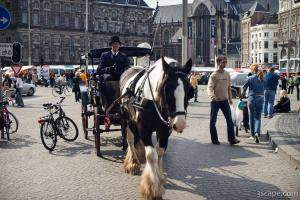 Horse and carriage at Dam Square