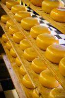 Dutch cheese on racks
