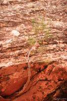 Tree clinging to the rock