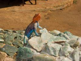 Colorful male Agama lizard perked up to look intimidating
