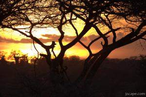 Sunset amongst Boabab and Acacia trees