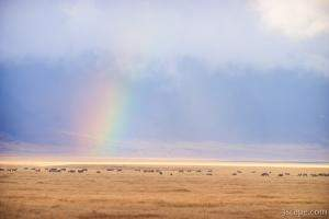 Rainbow and animals on the crater floor