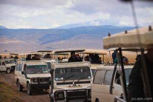 A huge throng of safari vehicles showed up to watch the feeding