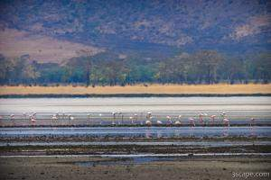 Lake Magadi is the most dominant water feature in the crater, th