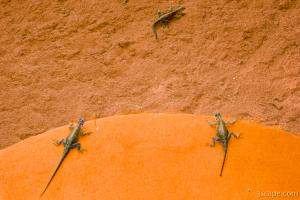 Several lizards