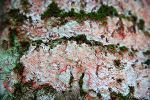 Lichens on a tree
