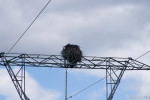Huge Ospray (Fish Eagle) nest on top of electrical tower