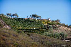 Malibu home on hill with rows of grape vines