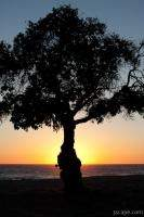 Tree at sunset, Leo Carrillo State Beach