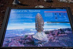 Descriptive sign about Ahinahina plant