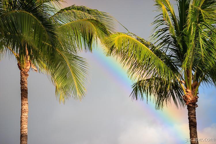 Rainbow And Palm Trees, Maui