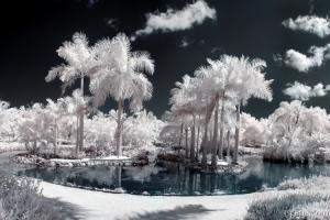 Tropical Paradise Infrared