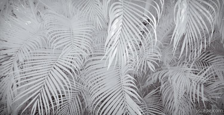 Infrared Palm Abstract