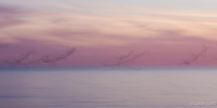 Pastel abstract - flying seagulls at dusk