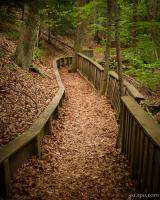 Winding wooded trail in PJ Hoffmaster State Park