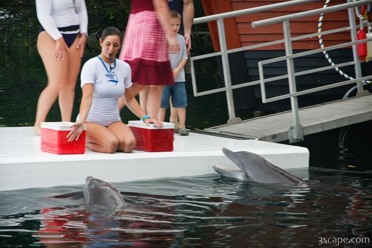 Trainers and dolphins