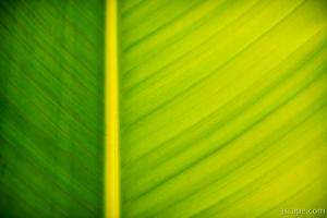 Palm leaf macro abstract