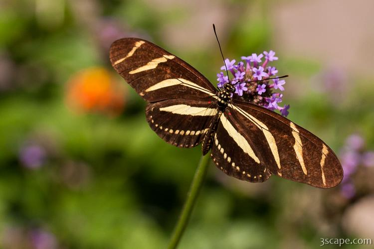 butterfly by drake adams Patrick tennyson, president and ceo patrick is the president and ceo of the butterfly pavilion in westminster, colorado he has been with the butterfly pavilion since june of 1999 and has been the organization's president and ceo since 2010.