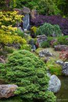 Cascade Waterfall - Japanese Tea Garden