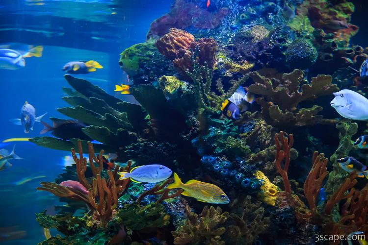 Aquarium Inside T Rex Photograph Landscape Amp Travel