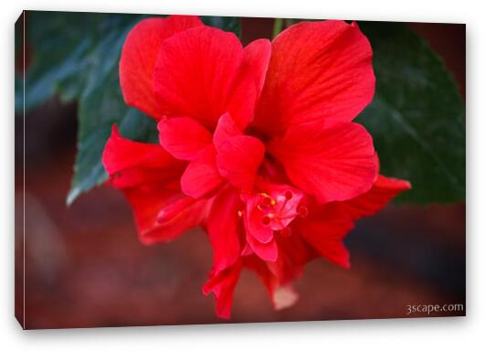 Hibiscus Flower Canvas Print Landscape Travel Photography For